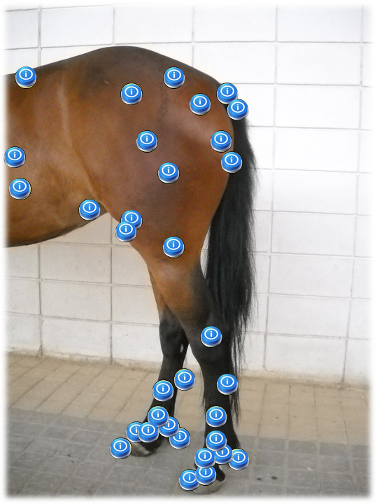 Development of a 3-D virtual tutorial for English learning in Veterinary