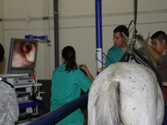 Endoscopio-para-aparato-respiratorio-cemede2