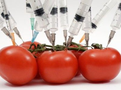 genetically modified food tomatoes syringes photo.jpg.400x300 q90 crop smart