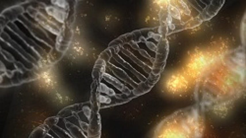 Researchers disprove one of the most widespread assumptions among geneticists regarding DNA