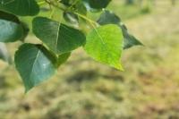 Una ecuación ayuda a explicar el crecimiento de las plantas y su adaptación al Cambio Global