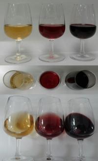 Vinos elaborados con equipamiento del  Grado de Enología