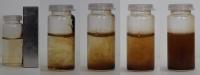 Secuencia en la que se observa la acción magnética de un imán en nanopartículas de óxido (izquierda) y cómo se dispersan cuando se retira el imán