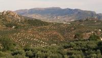 Las cenizas de biomasa del olivar se ha revelado como un buen componente para mortero
