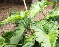 Una de las plantas estudiadas por el equipo de la UCO