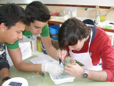 Escolares desarrollando una actividad de cristalización