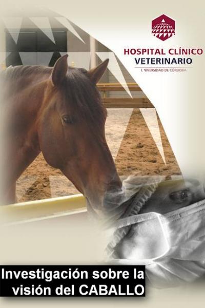 Investigación del Hospital Clínico Veterinario sobre la visión del caballo