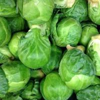 Las coles de Bruselas son uno de los cultivos más afectados