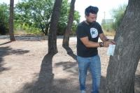 Juan Barbado, inyectando la vacuna a un pino