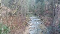 Nanopartículas de carbono y enzimas para conocer la contaminación de los ríos