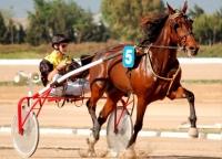 Un caballo trotador en competición