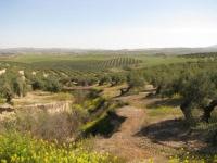 Terreno afectado por la aparición de cárcavas.