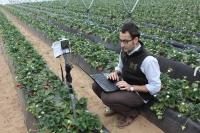 Investigador de la UCO y del ceiA3 toma muestras 'in situ' en una explotación de fresa