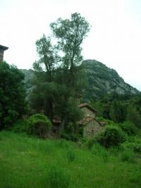 La Iglesia y el olivo de Santa Maria de Lebeña