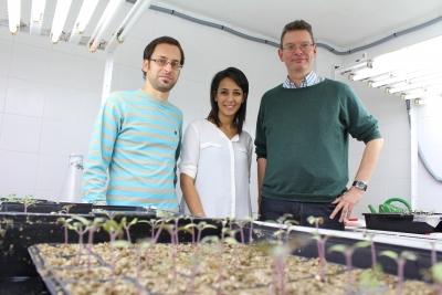 David Turrà, Mennat el Ghadid y Antonio Di Pietro, genetistas de la Universidad de Córdoba, frente a plantas de tomate con las que investigan los mecanismos de colonización del hongo 'Fusarium oxysporium'.