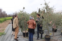 OLIVE MIRACLE. An application to predict the future of the olive tree