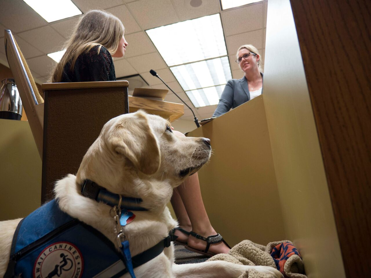 Courthouse facility dog. By David Walsen [CC BY-SA 3.0 (https://creativecommons.org/licenses/by-sa/3.0) or GFDL (http://www.gnu.org/copyleft/fdl.html)], via Wikimedia Commons