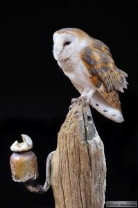 Segundo Premio en el concurso de Fotografía Ornitológica de Posadas