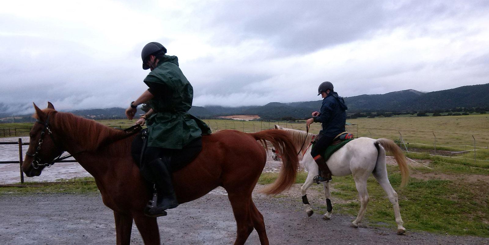 caballos-cemede-slider-walking-2