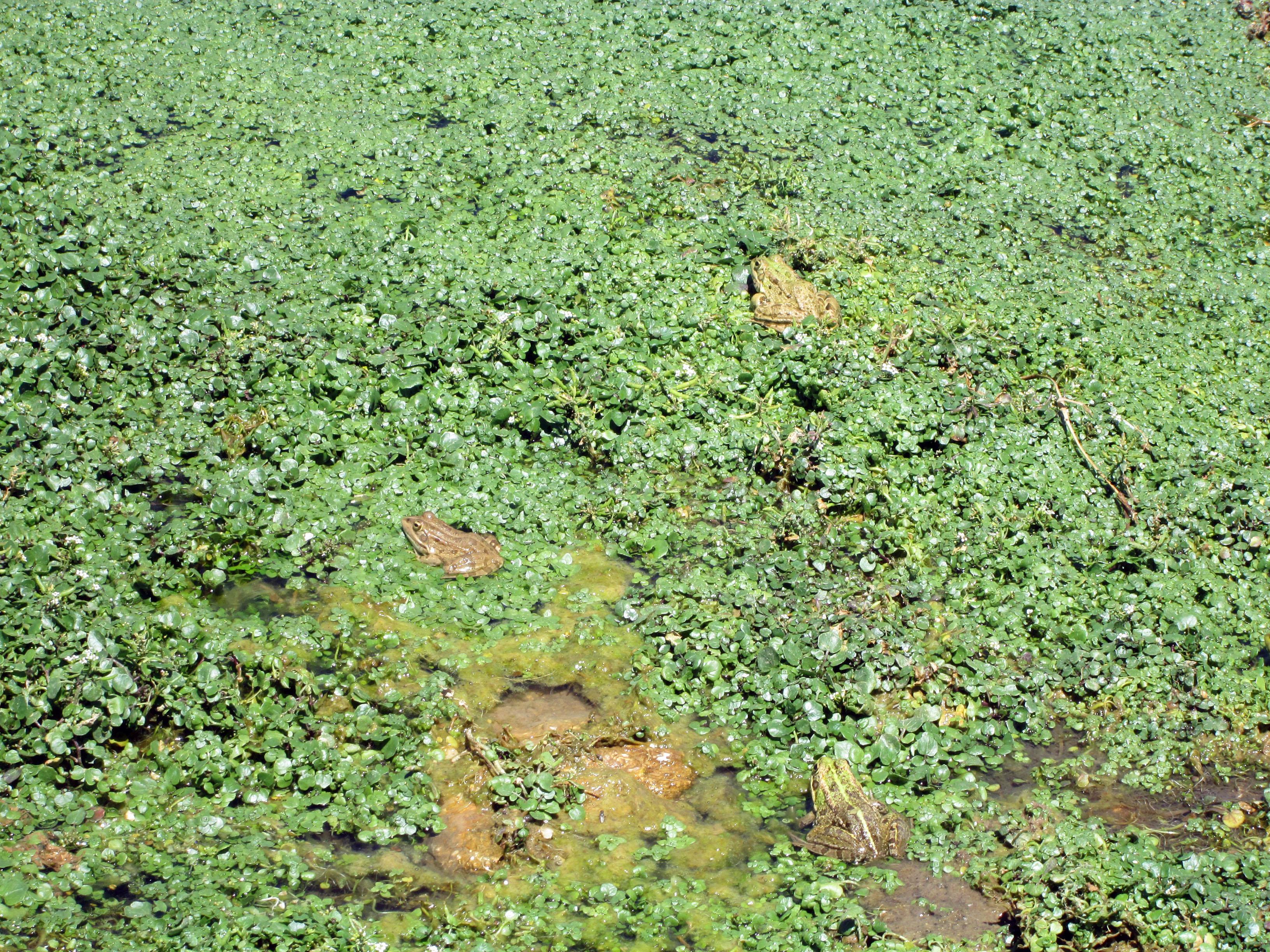 Fauna Y Flora Biodehesa