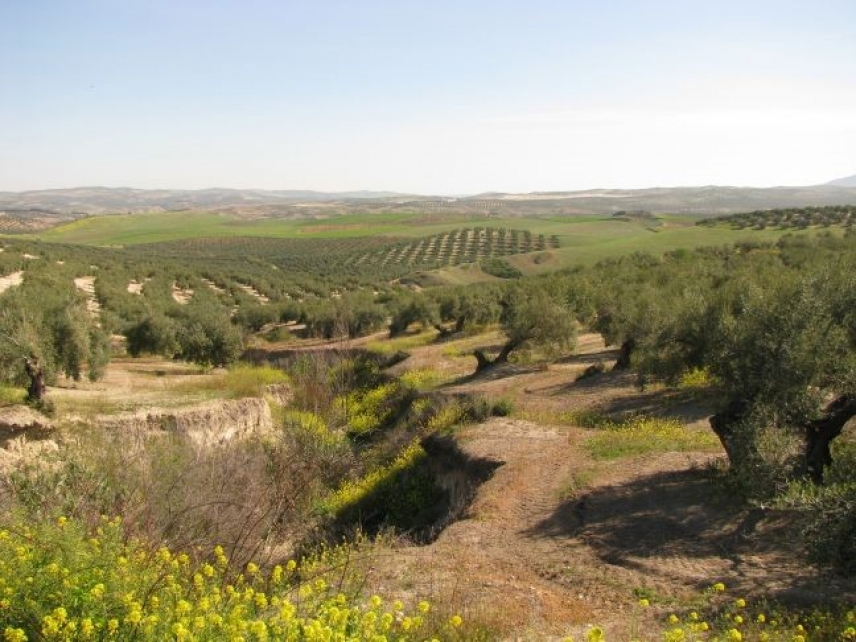 Theeffect of rainfall and vegetation in controlling the erosion of Mediterranean cropland