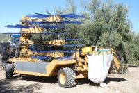 A new harvester decreases the cost of olive picking in traditional olive groves