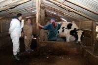 Librado Carrasco durante un actuación veterinaria en Líbano