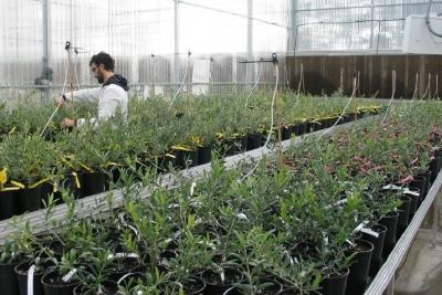 El ceiA3 pone en marcha el  Centro Internacional de Recursos Genéticos del Olivo