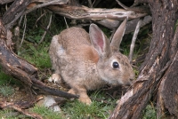 El conejo de monte protagoniza la III Jornada de Caza, Pesca y Naturaleza