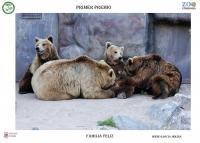 IV Certamen de Fotografía  de Comportamiento de animales de ZOO entre el Zoo de Córdoba y la Facultad de Veterinaria