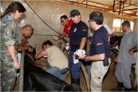 Cirugía de emergencia en Sarda