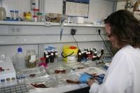 Enseñan a identificar de forma fiable del auténtico jamón de bellota para evitar fraudes