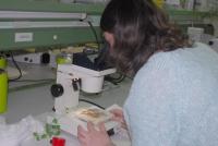 La resistencia vegetal a los hongos ha sido uno de los temas abordados