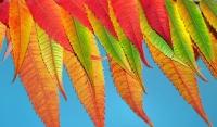Un nuevo avance para comprender la variabilidad de las hojas de las especies leñosas mediterráneas