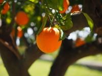 imagen de archivo de una naranja