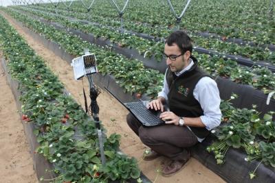 Un integrante del equipo científico del Departamento de Agronomía de la UCO sobre mejoras tecnológicas en cultivos hortícolas realiza mediciones en una plantación fresera