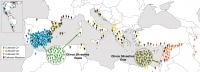 Expansión del olivo por la cuenca mediterránea. Las muestras Q1 y Q3 tienen más coincidencias genéticas entre ellas que con las muestras Q2.