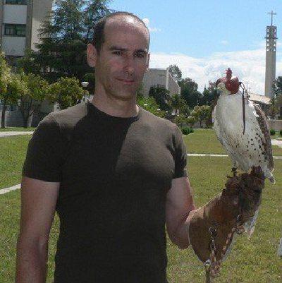 La Universidad de  Córdoba desarrolla un proyecto de hacking destinado a lograr la reintroducción del halcón peregrino.