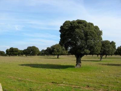 Dehesas y ranchos son explotadas ganadera y cinegéticamente