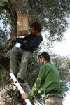 Un momento de la instalación de los nidales