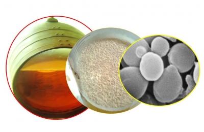 Representación de los pasos de la investigación, desde la bodega hasta la célula de la levadura que forma el velo de flor