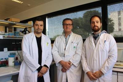 Los investigadores de la Universidad de Córdoba en el IMIBIC Marco Calzado, Eduardo Muñoz y Víctor García.