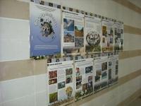 Rabanales acoge una exposición sobre biodiversidad